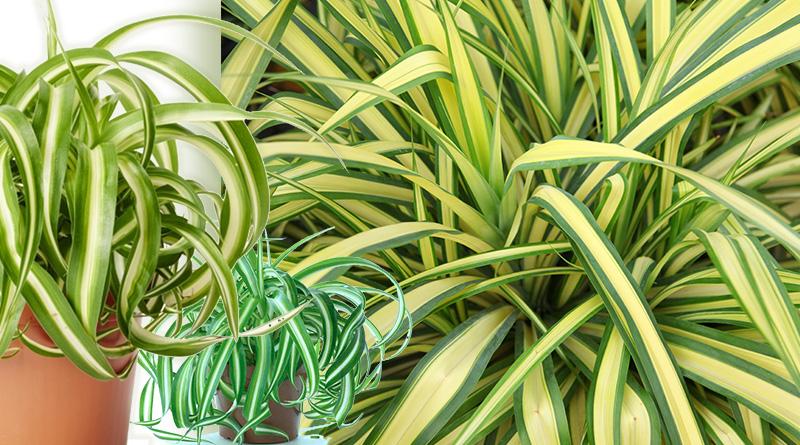 Самое полезное растение для дома