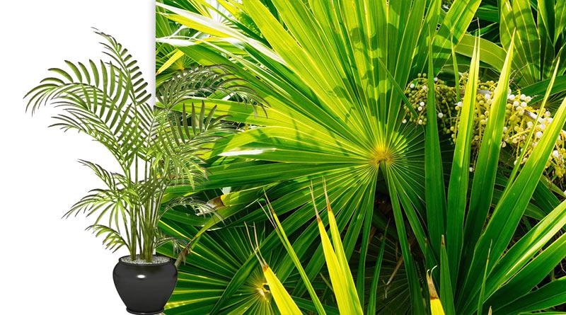 полезные растения для вашего дома бамбук