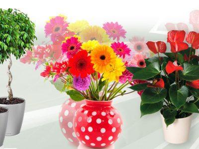 Самые полезные растения для дома